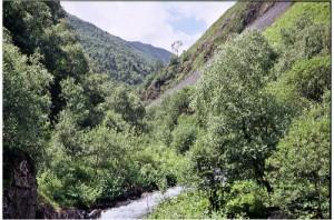 Alto-montane forest in Khevsureti near Mutso