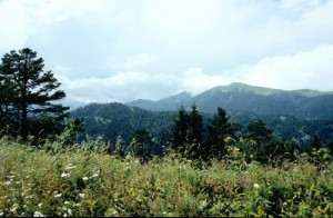 Borjomi National Park with meadows, forest and alpine mats